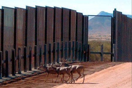 Border walls pose threat to wildlife