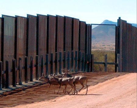Many species have been affected by border walls such as this one.