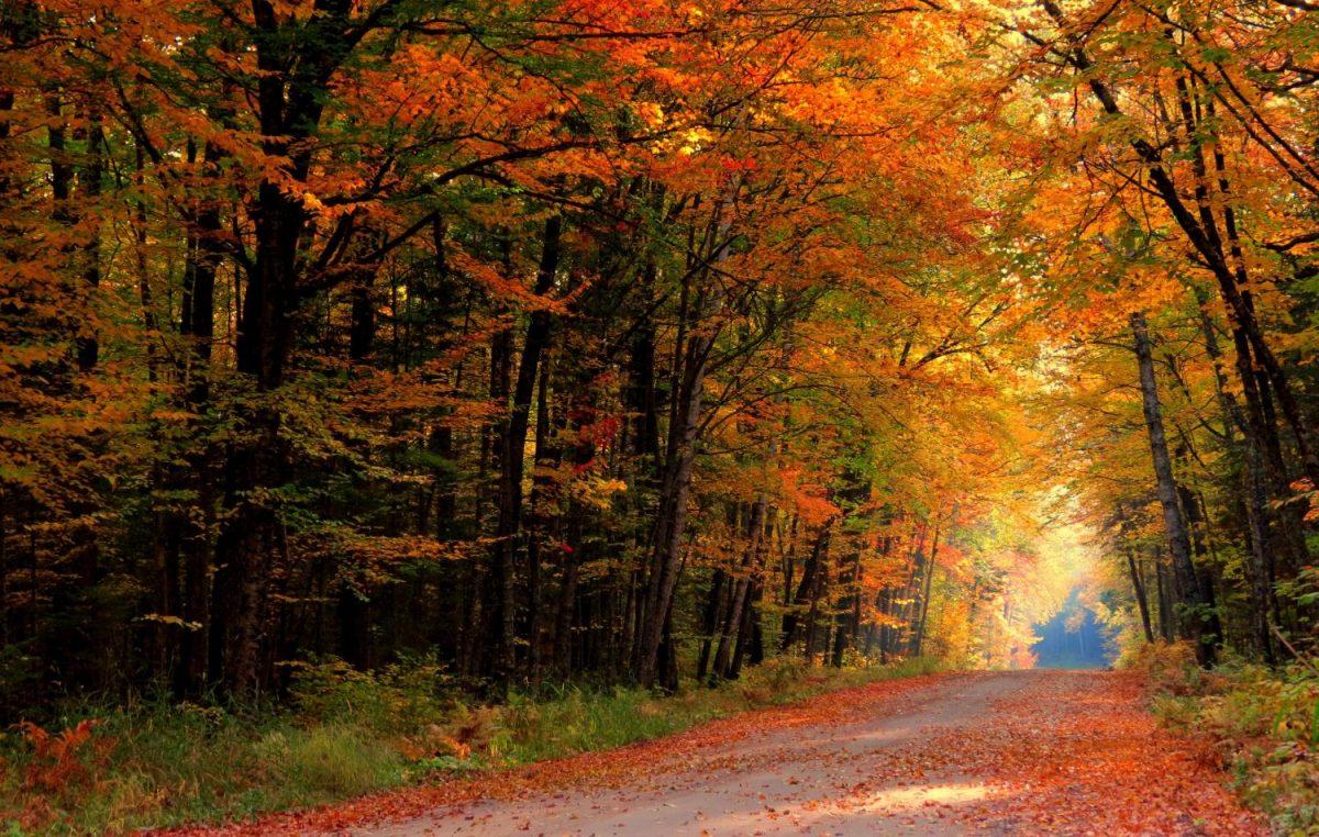 Fall+Beginnings
