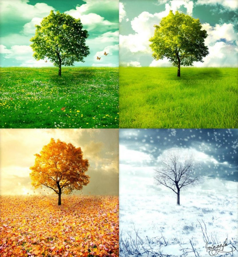 Favorite seasons for students