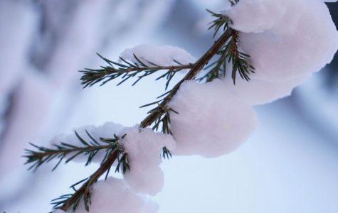 Record Winter Season