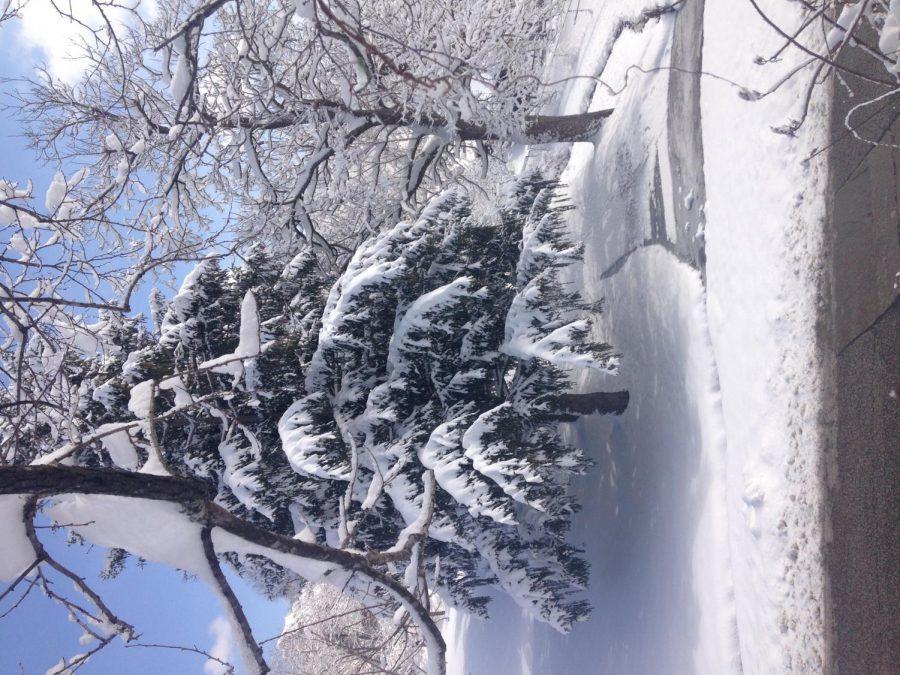 White+Christmas+