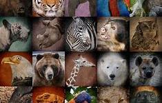 Endangered and Extinct Species Part 1