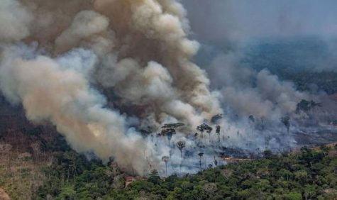 The Amazon Rainforest Fire