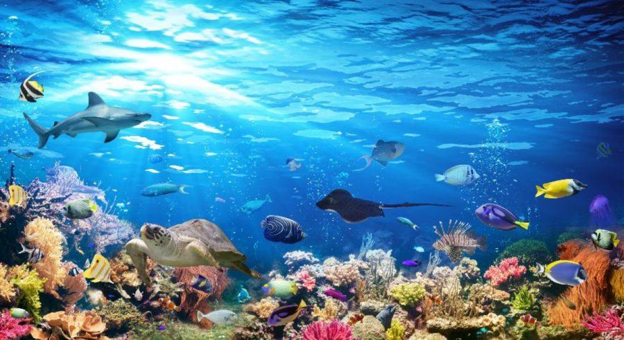 Ocean+Life